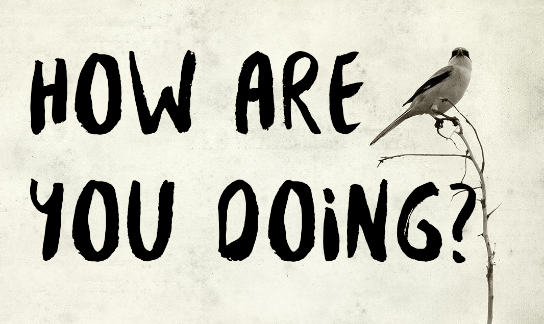how-are-you-doing-bird.png